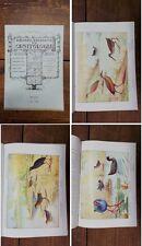 RIO - Rivista Italiana Di Ornitologia - 1942 - 4