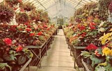 MANSFIELD, OH Ohio  KINGWOOD CENTER~Greenhouse Flowers RICHLAND COUNTY Postcard