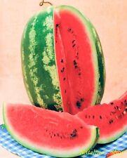 Wassermelone *Favorit* 10 Samen *Beliebte russische Sorte *Süß *Melonensamen