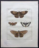 VERY RARE 1773 DRURY Vol.2 FOUR LEPIDOPTERA Pl#24 HandColored Copper Plate XXIV