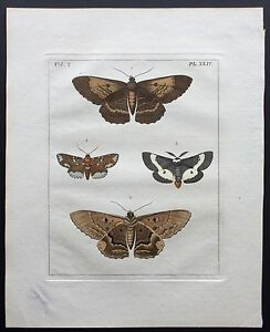 VERY RARE 1773 DRURY Vol.2 FOUR LEPIDOPTERA Pl#24 HandColored Copper Plate XXIV