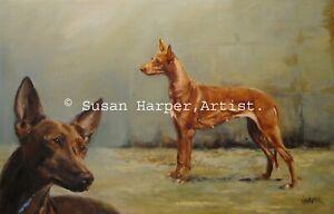 SALE Pharaoh Hound Signed Dog Print by Susan Harper Unmounted