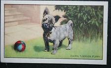 Cairn Terrier Puppy   Original Vintage Card  # CAT H