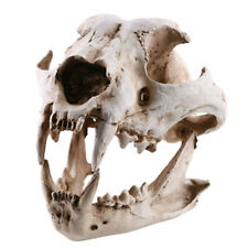 Resin Dog Canine Skull Head Replica Model Reptile Terrarium Decor Home Art