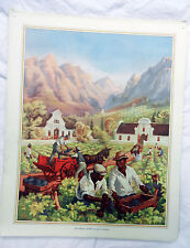 Vintage Schools Poster - Gathering Grapes in South Africa c 1920s / 1930s