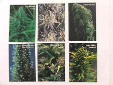 Hemp Series 2 set of 6 promo cards issued 1996