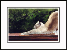 """The Stretch"" - Birman Framed Ltd. Ed. Cat Art by Print Drew Strouble Catmandrew"