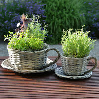 2 Willow Teacup Planters Flower Pot Garden / Indoors Plant Christmas Gift