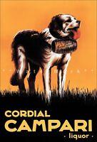 Campari Cordial 1920 St Bernard Dog Vintage Poster Print Retro Style Art Liquor