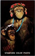 STAMFORD, CT Connecticut    Stamford COLOR PHOTO, Inc.Cute CHIMPS c60s  Postcard