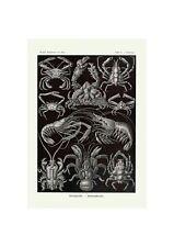 Crustaceans Biology | Marine life Illustration German Art Ernst Haeckel,1904