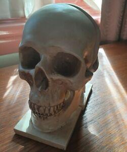 Skull Book Ends