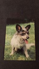 Für Liebhaber und Sammler:2  alte  Postkarten: Hunde