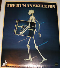 Awesome Life Size Skeleton Paper Model Kit