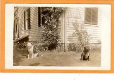 Real Photo Postcard RPPC - Two Pit Pitt Bull Dogs in Yard