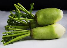 100 Green Turnip Seeds Radish Raphanus Sativus Organic S020
