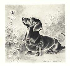 Dachshund - Morgan Dennis Dog Print - MATTED