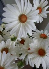 Artificial White Daisys x 5