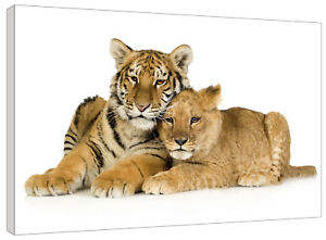 Tiger and Cub on White Background Canvas Wall Art Picture Print