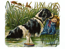 NEWFOUNDLAND DOG SAVING BOY FROM WATER GREETINGS NOTE CARD