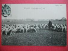 BEAUVOIR  :  Un Pâturage dans la Brie......VO.1906.