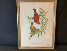 J GOULD AND H. C. RICHTER (British, 19th Century) Scarlet Finch Lithograph