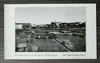 OPF B) Blatt Bayern Weichs bei Regensburg 1928 Ort Rettichkulturen Bauernhöfe