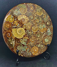 More details for madagascan crystal formed fossil 416 million year old ammonite & metal stand