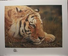 "Denis MAYER Siberian Tiger LTD art print Ducks Unlimited "" Beauty at Rest """