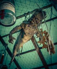 Abnorm präparierte Fidschi Meerjungfrau Kuriosität Taxidermy Mermaid FeeJee Gaff