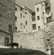 Robert THUILLIER - Corse 1950 - Chat d'Ajaccio