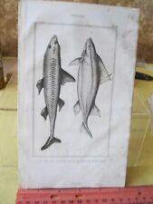 Vintage PRINT,FISH,1836,Comte De Lacepede, p1092