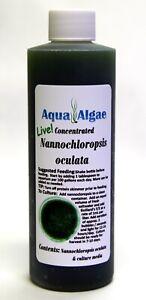 LIVE Nannochloropsis 8 oz Culture Phytoplankton Rotifer Pod Algae Free Shipping