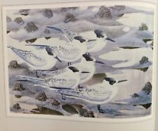 Sandwich Terns Vintage Print By Tunnicliffe Beautiful Birds Can Be Framed