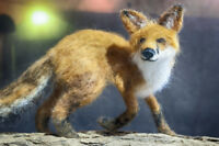 Fox - Needle Felted Animal Sculpture, One of a Kind