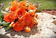 20+ ORANGE LISIANTHUS FLOWER SEEDS  / LONG LASTING ANNUAL
