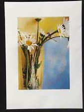 Daisies  ( Margeriten ) ( Sarah Jarrett ), Kunstdruck 50 x 70 cm