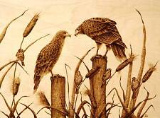 "ORIGINAL ANIMAL ART- HAWKS- DRAWING/PYROGRAPHY/WOODBURNING-""DO YOU SEE ME?"""""