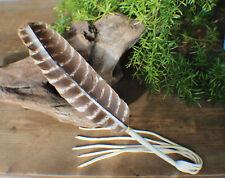 Prayer Feather w/ Deer Leather Fringe Cherokee made William Lattie Cert of Auth