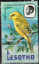 Lesotho Fauna Birds Canary stamp 1981 MLH