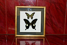 Butterfly in the frame for interior decoration Décor Home Décor Posters & Prints