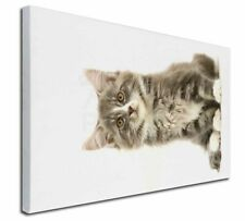"Cute Tabby Kitten 30""x20"" Wall Art Canvas, Extra Large Picture Pri, AC-187-C3020"