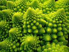 Broccoli Seeds 20 Seeds Brassica Oleracea Green Tower Cauliflower Vegetable C067