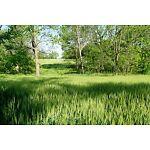 Tall Grass Sales