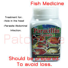 Medicine For Flowerhorn Fish Hole In The Head Parasite Abdominal Infection