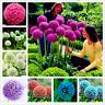 200 PCS Seeds Purple Giant Allium Giganteum Beautiful Flower Bonsai Garden Plant