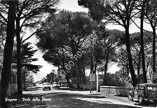 Cartolina Fregene Viale della Pineta