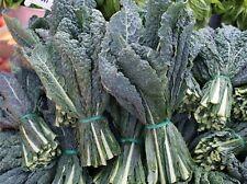 Black (Lacinato, Dinosaur) Kale Seeds- 400+     $1.69 Max. Shipping per order