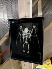 Taxidermy real complete  skeleton ,(Rousettus leschenaultii) cased in deep frame
