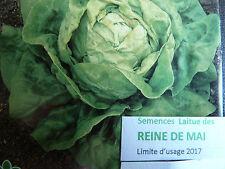 Graines semences Laitue Pommée REINE DE MAI   salade   seeds